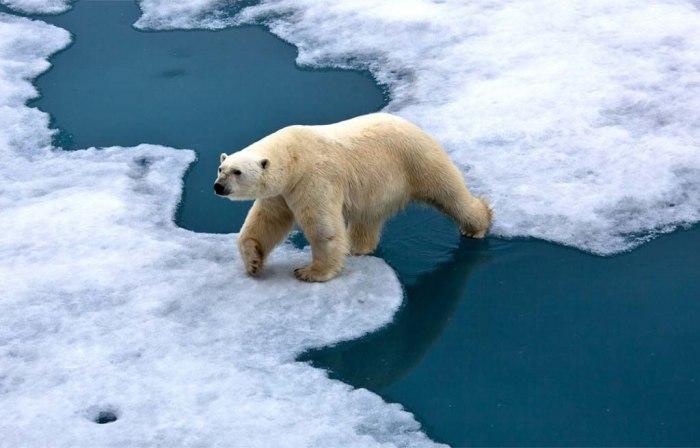 Una #ComunicazioneResponsabile per le Crisi Ambientali