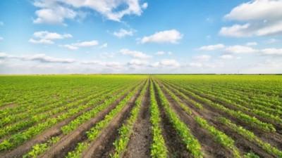 Agricoltura e alimentazione: nuova guerra del cibo?